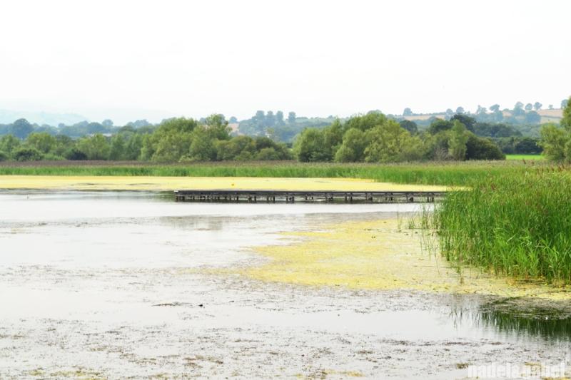Llangorske lake