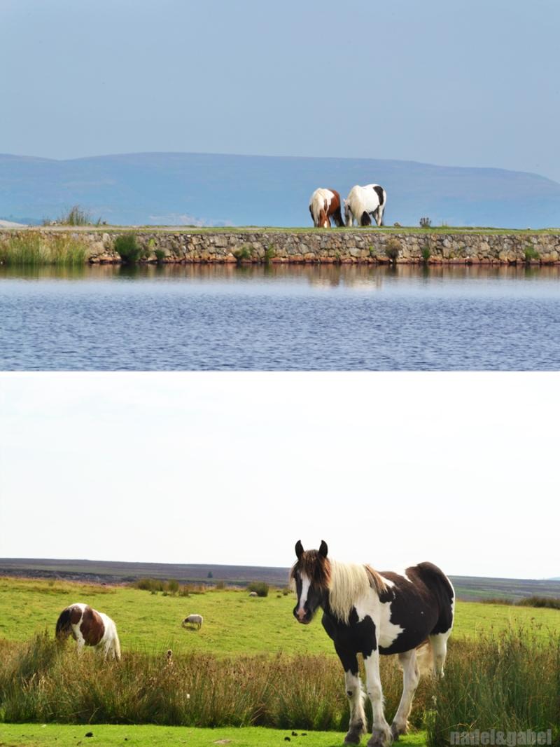 Pen-Ffordd-Goch Pond1
