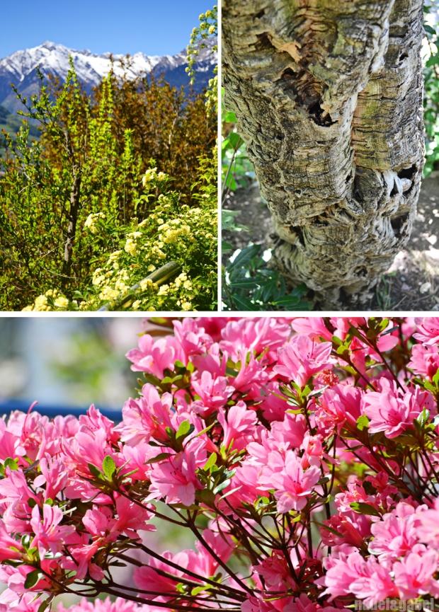 Trauttmansdorff gardens - Merano 5