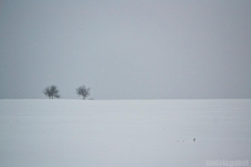 snowy winter landscape 6