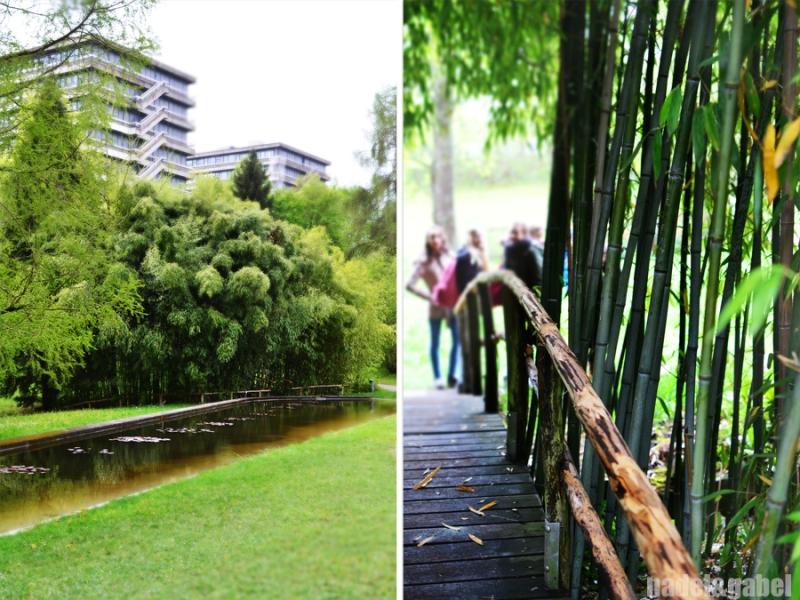 Botanical Garden 12