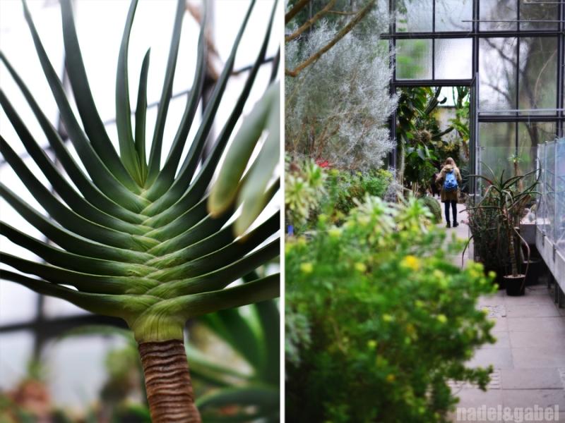 Botanical Garden 6