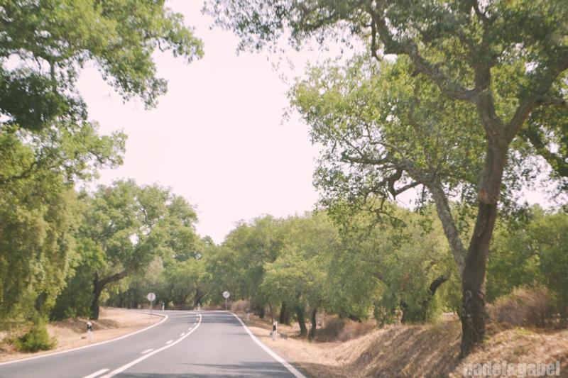 Alentejo cork oak