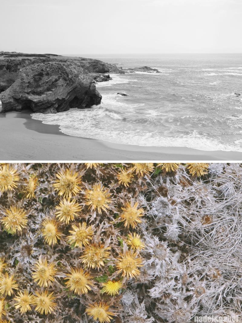 Praia Porto Covo 1