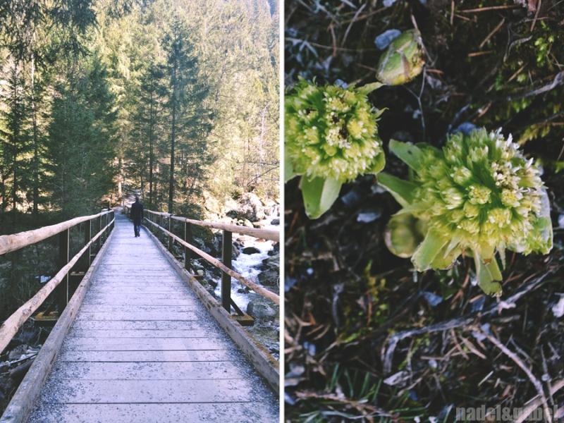 nature walk Hofgastein