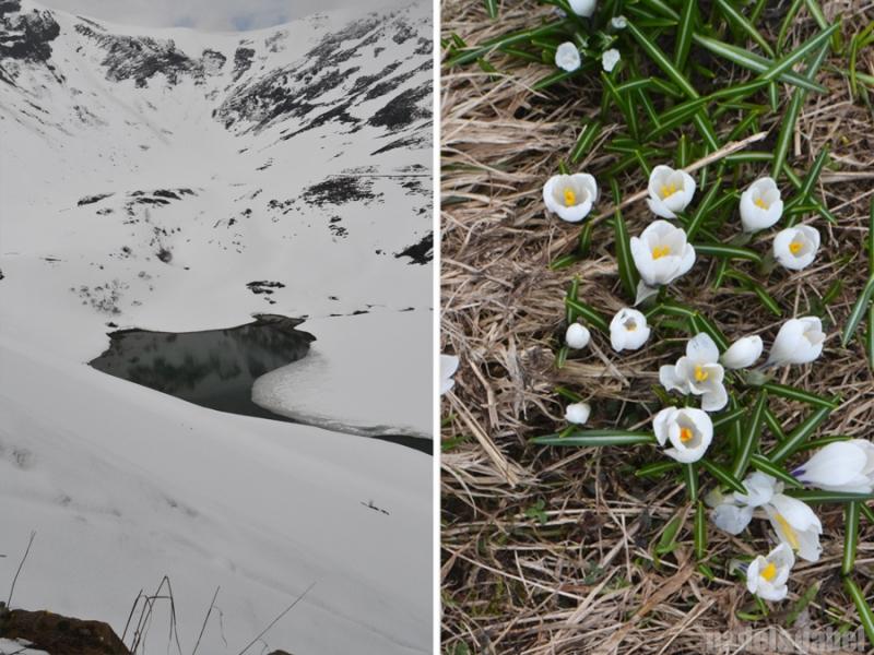 mountain nature awakening